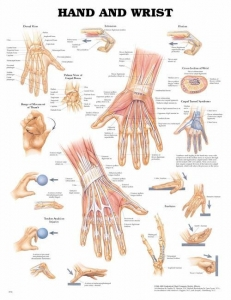 Hand & Wrist Hard Laminated Chart - Click for more info